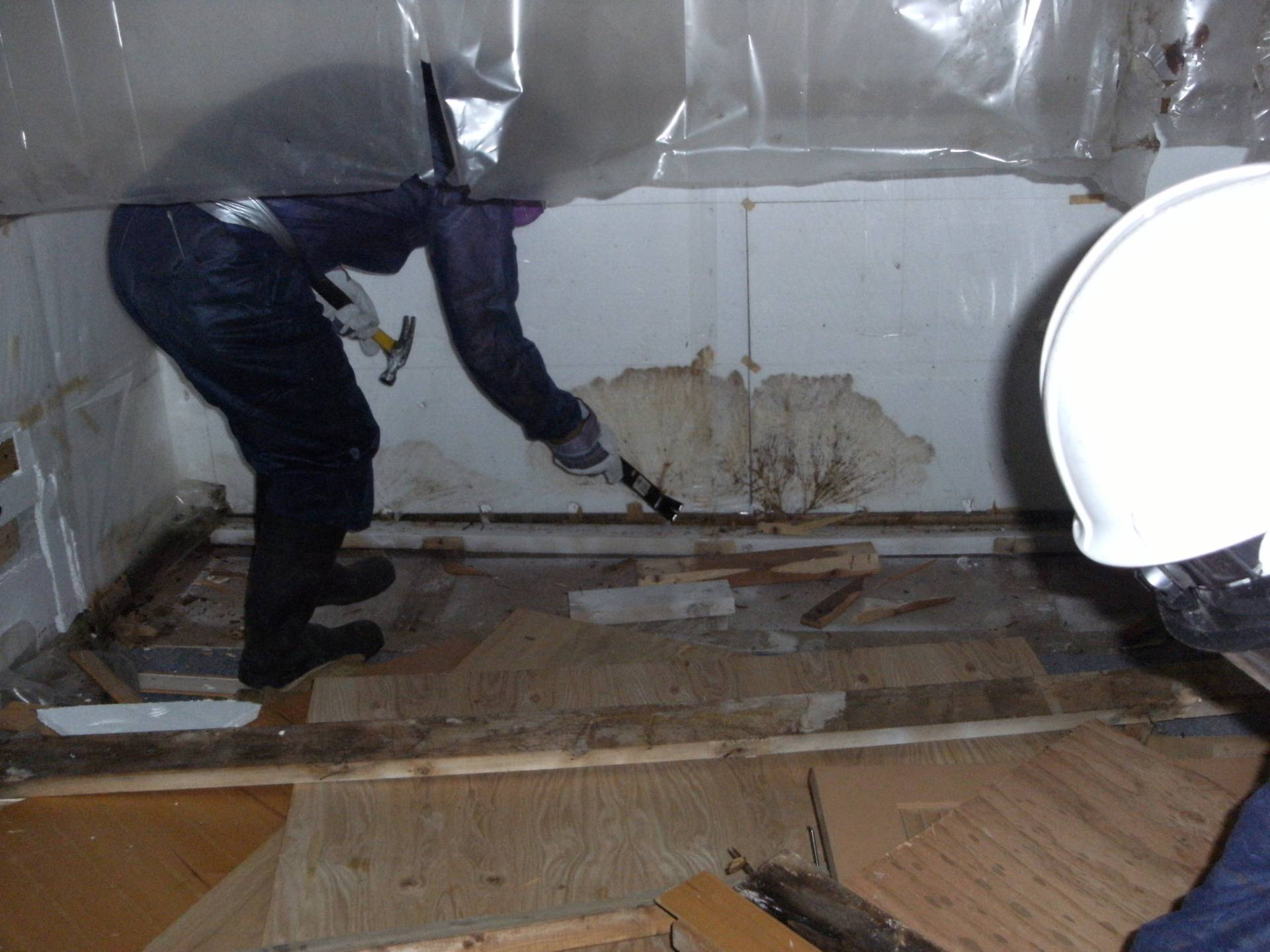 mold removal company performing mold removal in lancaster pa