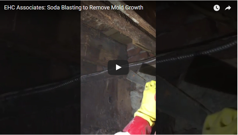 Mold Removal in Philadelphia, PA