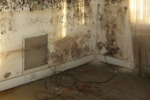corner of room in philadelphia building covered in mold