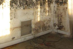 corner of room covered in mold in philadelphia pa